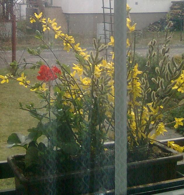 Jaro za okny