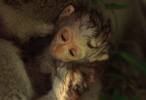 Mezi opicemi