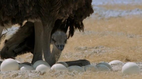 Před tím se nedá ukrýt hlava do písku ani na poušti