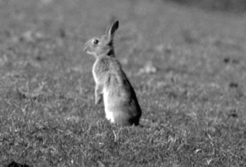 Občas zavítala i návštěva největších zvířat, jak se nechali slyšet strážci nejbezpečnější zóny na světě pro králíky