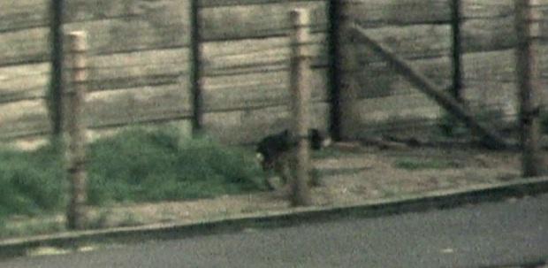 V uzavřených koridorech psi doplnili lidskou ostrahu i minová pole v okolí a na mnoha místech obohatili jednotvárnou komunitu králíků a strážců jejich bezpečí