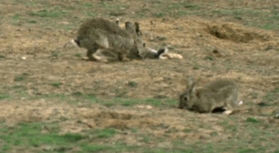 Snad každý věřil tomu, že svět patří jenom králíkům z uzavřeného prostoru