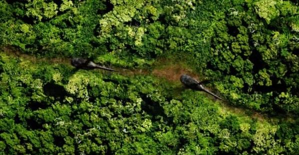 Opět s nutností prosekat se bambusem i za cenu poškození vrtule s následným pádem