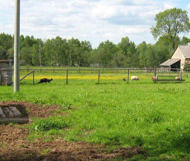 Pohled na část pastvin pro ovce a kamerunské kozy v pozadí s rybníkem