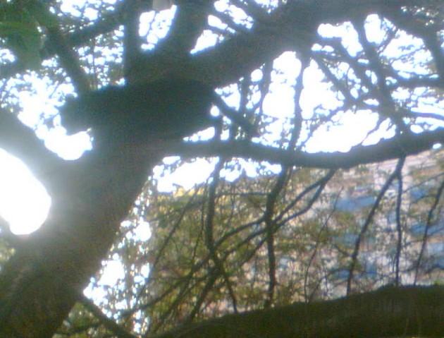 Na stromě se slunili ve třech