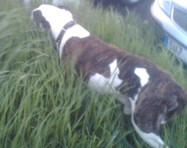 Takhle se ládoval trávou asi deset minut