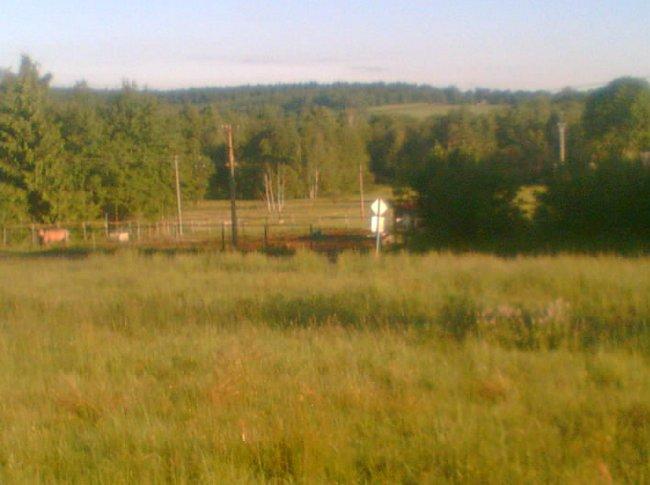 Pohled na pastviny při vochcávání od lesa