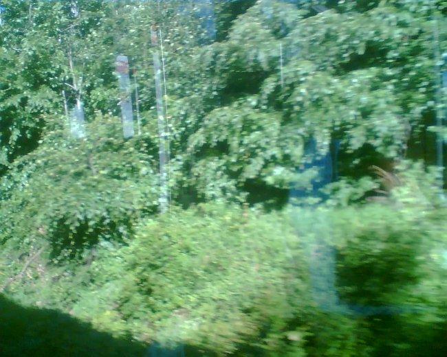 Za okny se míhaly pouze stromy z rozlehlých pohraničních lesů