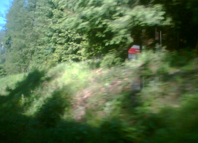 Nevadí mi to, les mám rád už od dětství