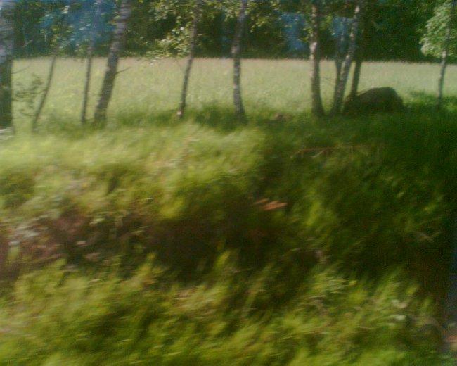 Les nás doprovází stále řídčeji