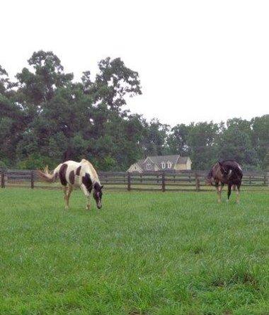 A uz jsme u dalsich koni, tentokrat vlevo od silnice /smer sever/.