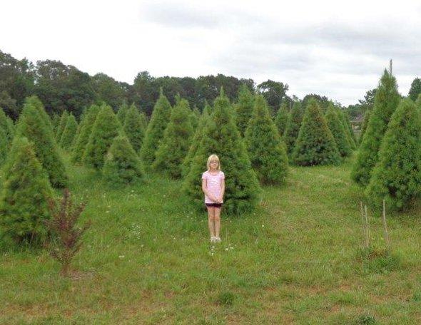Na jih, naproti Morning Dew, je tato mala farma vanocnich stromku.