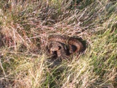 Bobova kráska, přijel s manželkou a chtěl taky vidět zmiji, tak zamířil v :P sandálech  na hadí louku