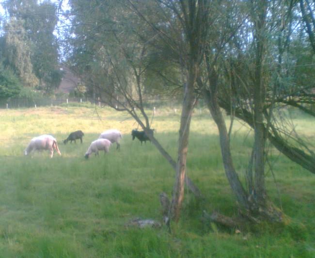 """Říkám si: """"To je nesmysl!"""", ale stejně jsem zamířil do ohrady pro ovce a kozy."""