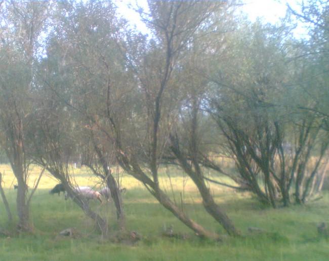 Stádo sice bylo roztoulaný po pastvině, ale zdálo se mi celkem v pohodě.