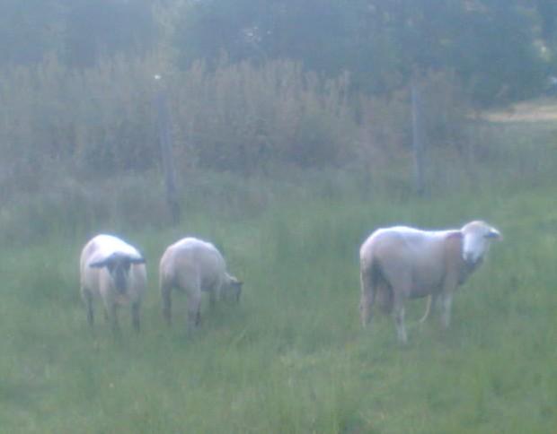 A najednou mi došlo, jak to je s ovečkou a :lol: visícím miminkem!