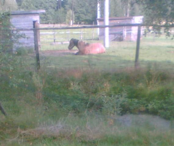 :P Jaká je pohoda, když se koně povalují