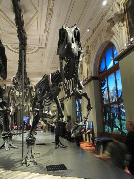 Noc v muzeu