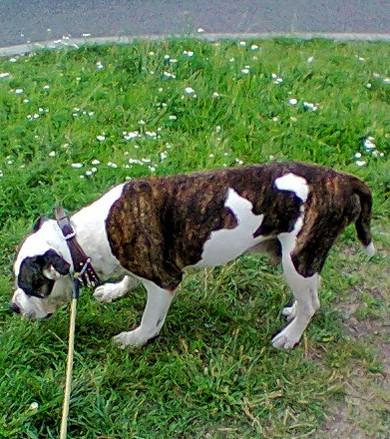 S okolím nejvíc komunikuje prostřednictvím čichu, prej slouží starejm psům nejlíp
