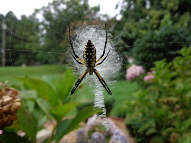 Nikdy jsem neměl rád pavouky, je jich tady víc než lidí!
