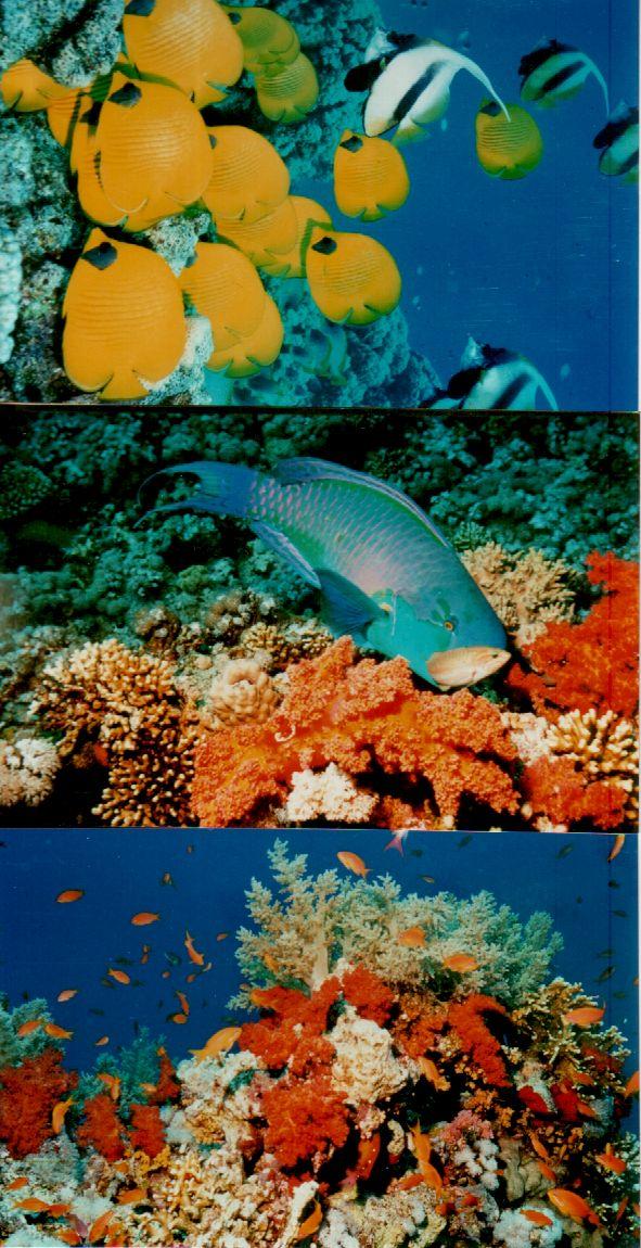 Hurghada Egypt 2002
